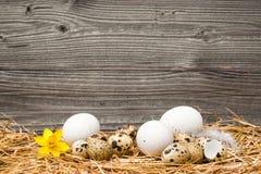 Ostereier auf hölzernem Hintergrund Stockfotos