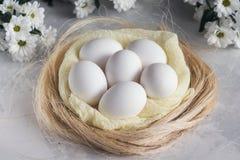 Ostereier in den weißen Blumen des Nestes und des Frühlinges auf weißem Hintergrund Lizenzfreies Stockbild