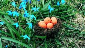 Ostereier in der orange Farbe im Nest nahe Blumen stock video footage