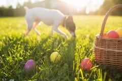 Ostereier in einem Korb auf dem Gras auf einer sonnigen Frühlingstagesnahaufnahme Laufender Hund lizenzfreies stockbild