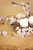 Ostereier im Nest mit Blumendekoration Lizenzfreie Stockbilder