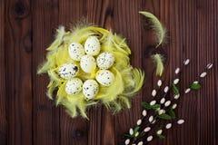 Ostereier im Nest und in der Feder Lizenzfreie Stockfotos