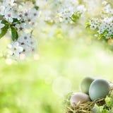 Ostereier mit Frühlingsblüten stockfoto