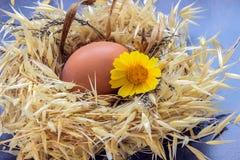 Ostereier mit Gänseblümchen im Nest Stockbild