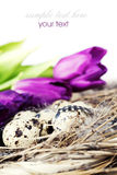Ostereier mit purpurroten Tulpeblumen Lizenzfreies Stockfoto