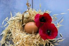 Ostereier mit roter Mohnblume im Nest Stockbilder