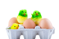 Ostereier und Hühner Lizenzfreie Stockbilder