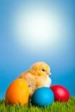 Ostereier und Hühner auf grünem Gras und Blau lizenzfreies stockfoto