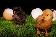 Ostereier und Huhn Lizenzfreie Stockbilder
