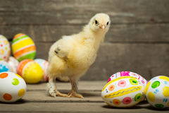 Ostereier und Huhn lizenzfreies stockfoto