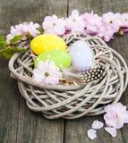 Ostereier und Kirschblüte-Blüte Lizenzfreie Stockfotos