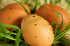 Ostereier unter Grasstämmen Stockfotografie