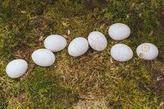 Ostereier verziert mit Wachs Stockfotos