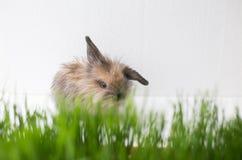 Osterhase auf grünem Frühlingsgras Stockfotos