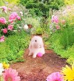 Osterhase im Garten Lizenzfreies Stockbild