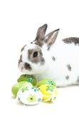 Osterhase mit Eiern Lizenzfreies Stockfoto