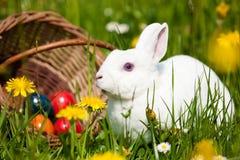 Osterhase mit Eiern im Korb Lizenzfreies Stockfoto