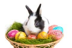 Osterhase mit Eiern im Korb Stockfoto