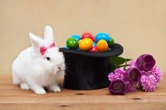 Osterhase mit Frühlingsblumen und bunten Eiern Lizenzfreie Stockbilder