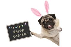 Osterhase Pughündchen mit den Ohren, den Eiern und Tafel mit Text fröhliche Ostern stockfotografie