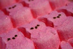 Osterhase - rosafarben u. zuckerhaltig! lizenzfreie stockfotografie