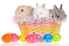 Osterhasen im Korb mit Eiern Lizenzfreies Stockbild