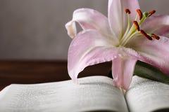 Osterlilie und Bibel Lizenzfreie Stockfotos