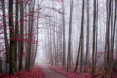 Ostermundigen WALD Zdjęcie Royalty Free