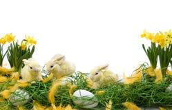 Ostern-Anordnung Stockfotos