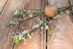 Ostern - blühende Niederlassungen mit Eiern lizenzfreie stockbilder