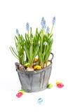 Ostern-Blumen Stockfoto
