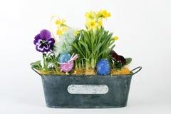 Ostern-Blumen Lizenzfreies Stockbild
