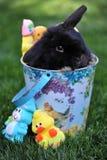 Ostern Bunny Basket stockbild