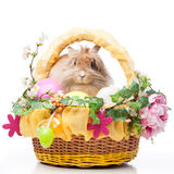 Ostern compisition Stockfotos