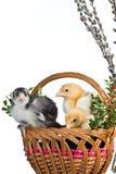 Ostern-Dekoration Stockfoto