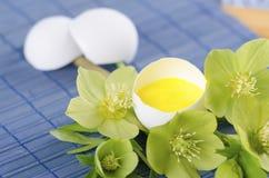 Ostern-Dekoration mit Eierschale Helleboreblume und -blütenstaub Stockfoto