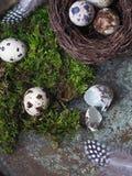 Ostern-Dekorwachteleier auf Moos, Nest mit Eiern und Vogelfeder Stockfoto