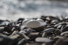 Ostern in dem Meer Stockfotos
