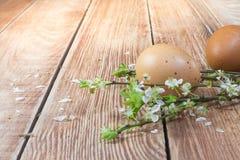 Ostern - Detail über Hühnerei mit blühenden Frühlings-Blumen lizenzfreie stockfotografie