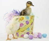 Ostern Entlein und Ckick Lizenzfreies Stockbild