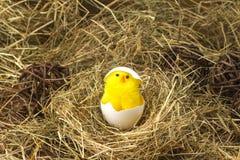 Ostern färbte Eier im Heu Kleines neugeborenes Küken Lizenzfreie Stockfotografie