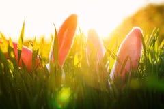 Ostern-Feiertagskarte mit zwei Paaren der rosa Ohren des lustigen lustigen Kaninchens stehen von der grünen sonnigen hellen Wies stockbild