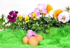 Ostern-Frühlingsblumeneier Stockbild