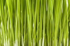 Ostern-Gras Stockbilder