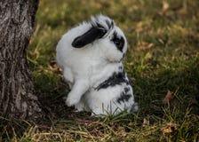 Ostern-Häschen auf Gras Stockfoto