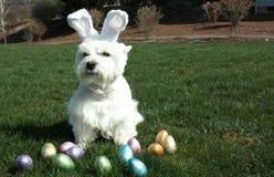 Ostern-Hund Stockfotografie