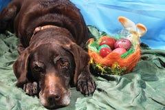 Ostern-Hund, der einen Korb von Eiern anbietet Stockbilder