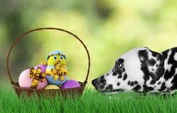 Ostern-Hund mit Eiern im Korb stockfoto