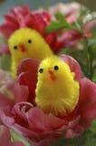 Ostern-Küken auf dem Blumengebiet Lizenzfreies Stockfoto