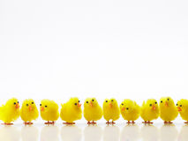 Ostern-Küken in einer Reihe Stockfoto